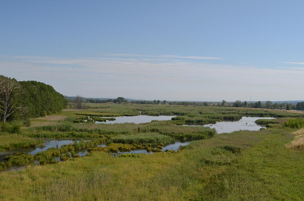 View of the Staffelder Polder near Mescherin, photo: M.Voigt