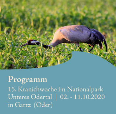 Nationalpark Unteres Odertal - Kranichwoche 2020
