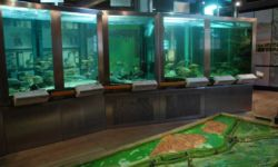 Aquarium im Nationalparkhaus Criewen